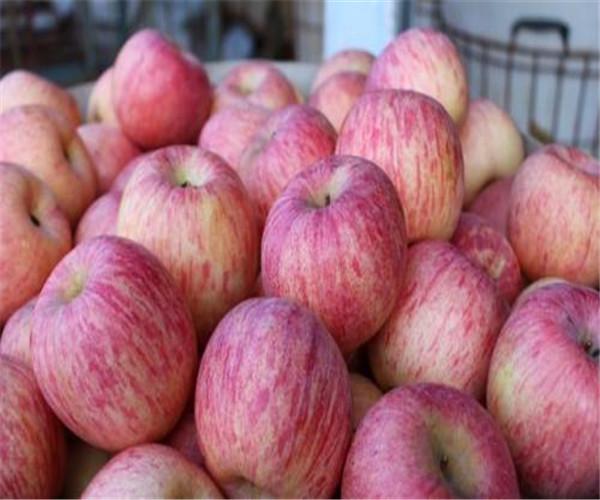礼泉苹果新批发价格