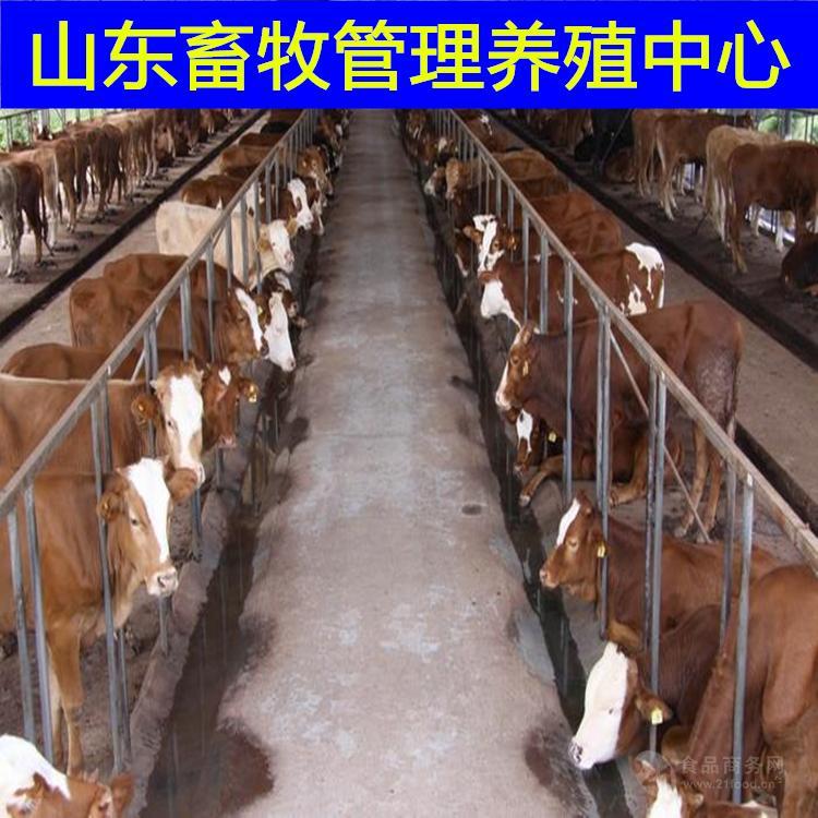 黄牛牛犊的价格黄牛价格是多少