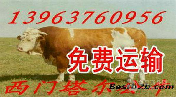 肉牛吃什么长的快