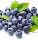 蔓越莓提取物 蔓越莓粉 蔓越莓花青素