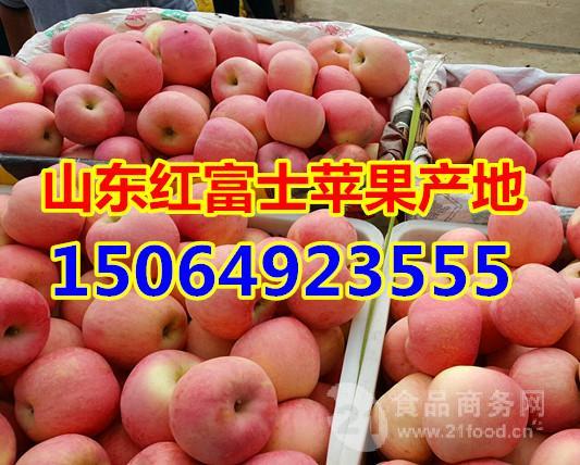 山东红富士苹果产地在哪