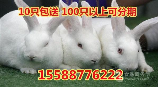 新西兰肉兔多少钱一斤