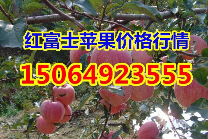 山东红富士苹果价格 冷库红富士苹果价格 沂源红富士苹果价格