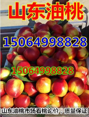 山东油桃大批量上市今日山东油桃价格