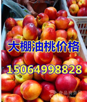 山东沂水油桃均价*山东油桃价格*山东黄肉油桃价格