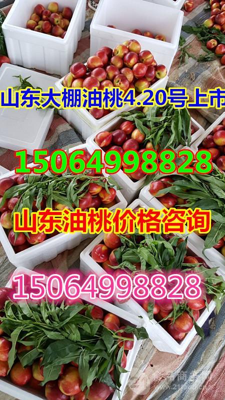 今日山东油桃行情*山东油桃价格*山东油桃产地
