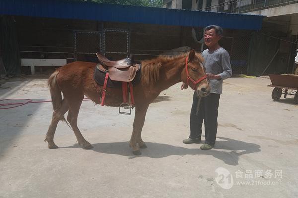 可爱的人小驴照片