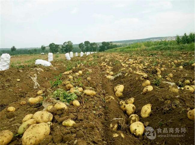 荷兰十五土豆产地澳门星际平台