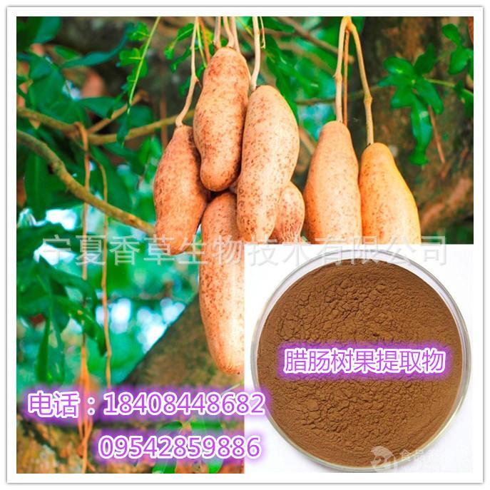 腊肠树果提取物 丰丽果提取物 缅甸便秘果粉 长期供应 1公斤起订