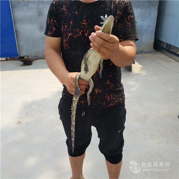 浙江海宁市带皮鳄鱼肉批发零售