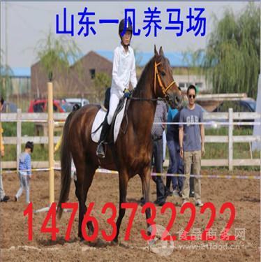 百色市纯血马品种及马匹价格介绍
