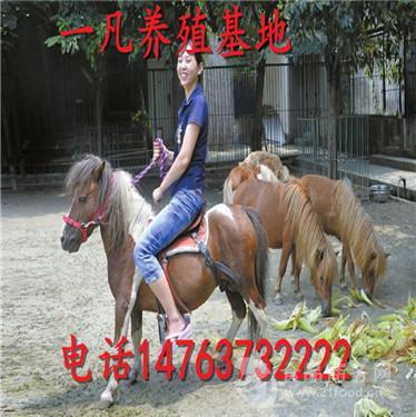 骑乘马价格 小矮马多少钱一匹