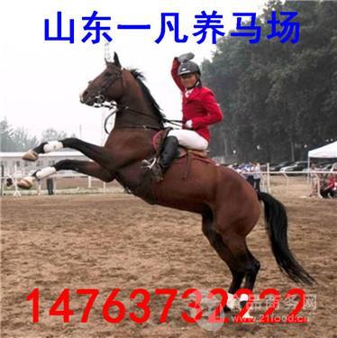 山东骑乘马养殖 半血马出售多少钱