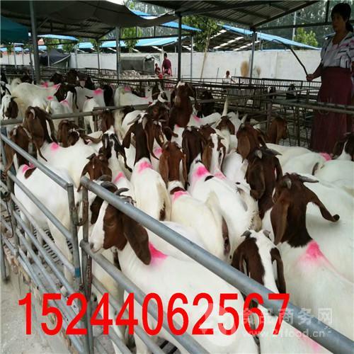 天津大型养羊场