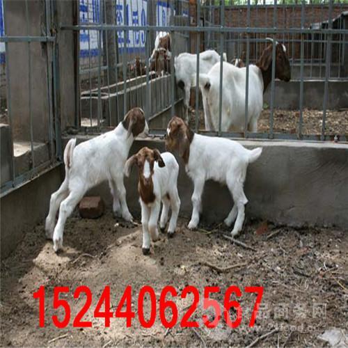 北京大型养羊场