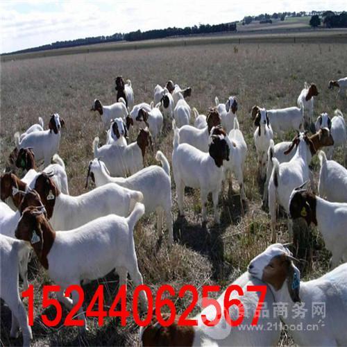 排名前10地方羊品种