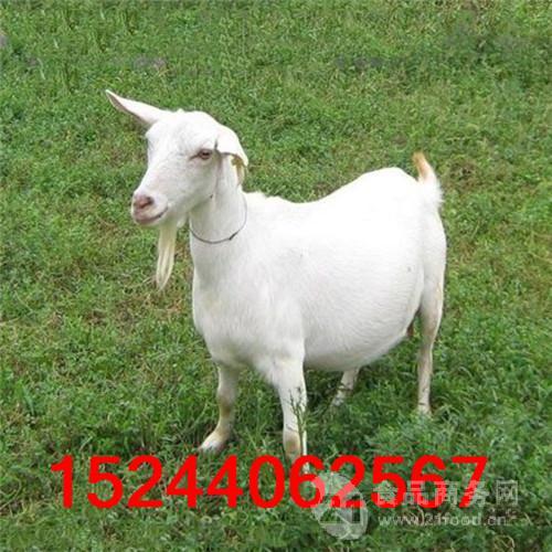华北地区大型养羊场