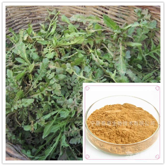 荠菜提取物20:1规格可定制荠菜浓缩粉 护生草提取物 稻根子草提取