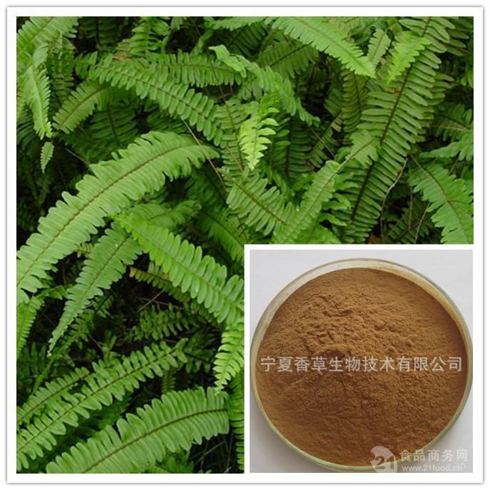 肾蕨提取物30:1 肾蕨浸膏粉 肾蕨速溶粉 多种规格 目数80-100目