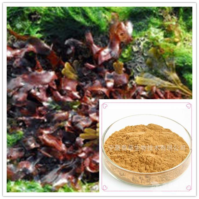 厂家供应 红皮藻提取物 10:1 红皮藻粉 1公斤起订 多种提取规格