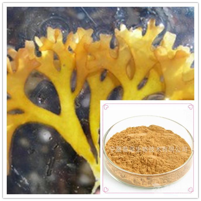 羊栖菜提取物 鹿角菜提取物 20:1 1公斤起订多种规格鹿角菜浸膏粉