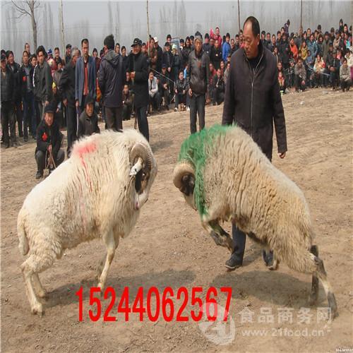 多大的斗羊厉害