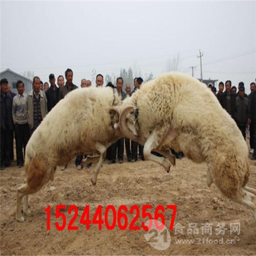 巨野斗羊出租出售