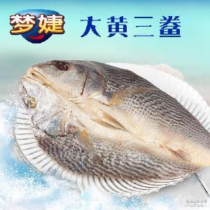 干货大黄鱼干 梦婕大黄三鲞600g宁波舟山特产海鲜 海产品黄花鱼