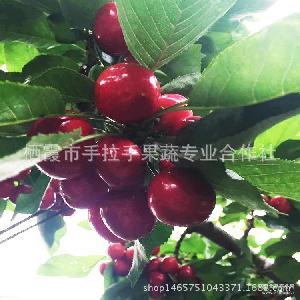顺丰包邮超大樱桃28mm 甘甜多汁新鲜采摘 正宗美国大美早樱桃