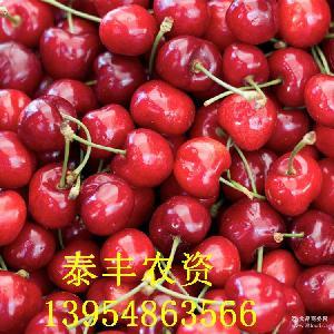 5斤包邮大樱桃 基地自产 出售大量现摘樱桃 保鲜到家