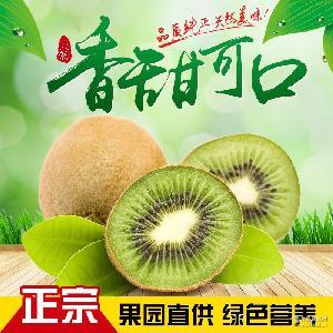包邮江山徐香绿心猕猴桃新鲜水果奇异果一盒6只试吃装代理批发