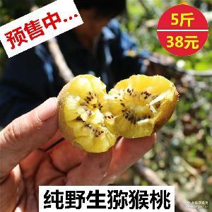 预售伏牛山纯野生猕猴桃奇异果天然孕妇新鲜水果5斤包邮