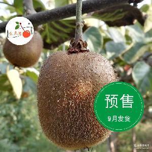 新鲜预售9月发货陕西眉县徐香猕猴桃3斤装