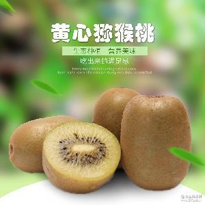 黄心猕猴桃果园现摘现发新鲜水果一手货源 预售 四川蒲江特产水果