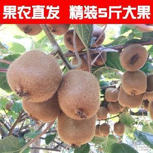 2017年陕西绿心猕猴桃现货新鲜水果共发5斤包邮奇异果非江山徐香