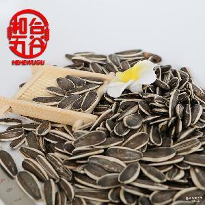 内蒙古优质产品 葵花籽363精品生葵花籽 原产地直销