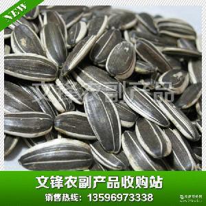 热销精品 瓜子批发 白葵花籽 363葵花籽