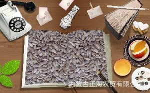 内蒙古五原县 供应精品葵花籽仁