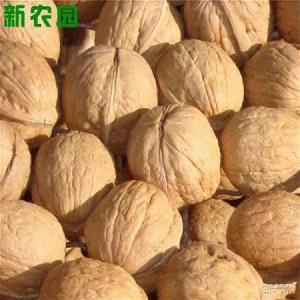 新疆若羌二级红核桃纯天然绿色产品 营养丰富 新疆批发核桃
