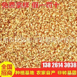 糙米营养粗粮 热销供应 生态营养糙米 五谷杂粮现货免费拿样