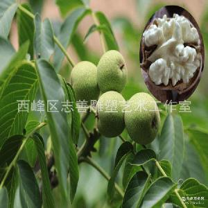 庆阳特产 湿核桃 青皮核桃 5斤包邮一件代发 新鲜核桃