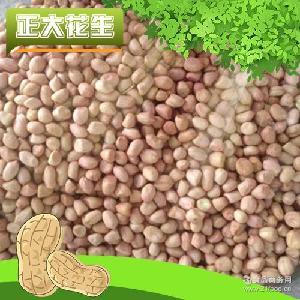 油料花生批发 长期供应 精选小白沙花生米 高质量花生米价格