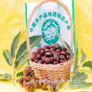 炒货 生板栗批发 泰山特产 泰山板栗 泰安特产板栗 农产品
