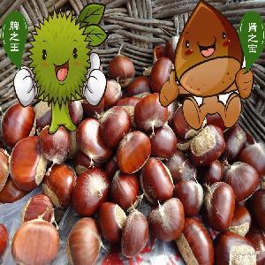 泰安油栗 大量批发山东特产泰山板栗 品牌店专用生鲜栗子产地直销