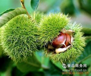 栗农直供优质天然新鲜燕山玉品板栗