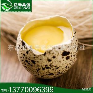原生态养殖鹌鹑蛋 鹌鹑蛋 厂家批发 新鲜鹌鹑蛋