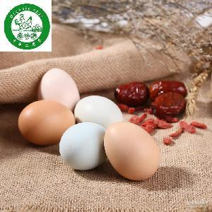 四川特产绿色新鲜禽蛋 有机原生态土鸡蛋 农家散养 批发土鸡蛋