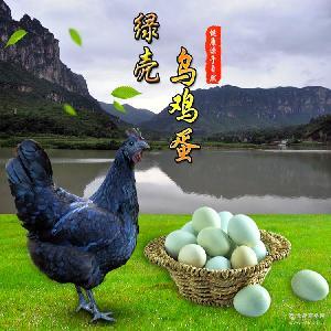 【一件代发】【微商进货】金丹生态散养绿壳乌鸡蛋青壳鸡蛋绿壳鸡