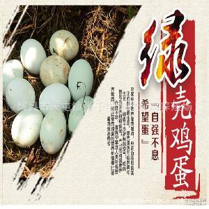 正宗绿壳乌鸡蛋 乌鸡蛋 太行山散养 绿壳鸡蛋 产地直供