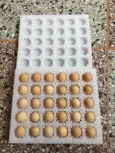 破损包赔包邮一件代发 柴鸡蛋50枚装 新鲜散养土鸡蛋 山鸡蛋